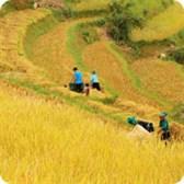 Luật hợp tác xã số 23/2012/QH13