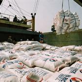Công văn 779/TTg-KTTH triển khai Đề án phát triển thương hiệu gạo Việt Nam 2016