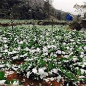 Nghị định 02/2017/NĐ-CP về chính sách hỗ trợ sản xuất nông nghiệp khôi phục sản xuất vùng bị thiệt hại