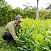 Mẫu đơn xin xuất khẩu/nhập khẩu giống cây trồng lâm nghiệp