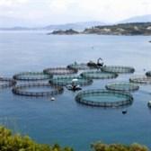 Quy định mới về quản lý thức ăn chăn nuôi, thủy sản