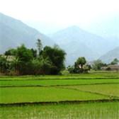 Mẫu đơn đề nghị tiếp tục được giao đất nông nghiệp cho hộ gia đình, cá nhân