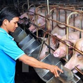 Thông tư 16/2017/TT-BNNPTNT về Quy chuẩn kỹ thuật quốc gia về yêu cầu vệ sinh đối với cơ sở sản xuất tinh lợn