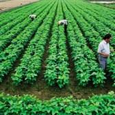 Mẫu đơn xác nhận hộ gia đình trực tiếp sản xuất nông nghiệp