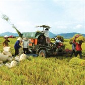 Nghị định 57/2018/NĐ-CP về cơ chế, chính sách khuyến khích doanh nghiệp đầu tư vào nông nghiệp, nông thôn