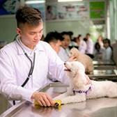 Nghị định 04/2020/NĐ-CP sửa đổi Nghị định xử phạt hành chính về giống cây trồng và thú y