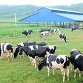Nghị định 13/2020/NĐ-CP hướng dẫn thi hành Luật Chăn nuôi