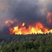 Thông tư 25/2019/TT-BNNPTNT phòng cháy và chữa cháy rừng