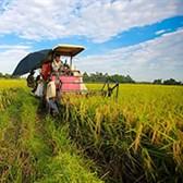Chính thức miễn thuế sử dụng đất nông nghiệp thêm 5 năm