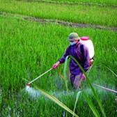 Thông tư 10/2020/TT-BNNPTNT thuốc bảo vệ thực vật được phép sử dụng, cấm sử dụng