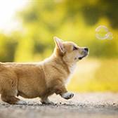 Top 10 tả con chó hay chọn lọc