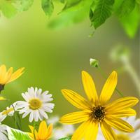 Quyết định 2454/QĐ-BGDĐT Chương trình bồi dưỡng giáo viên THCS dạy môn Khoa học tự nhiên